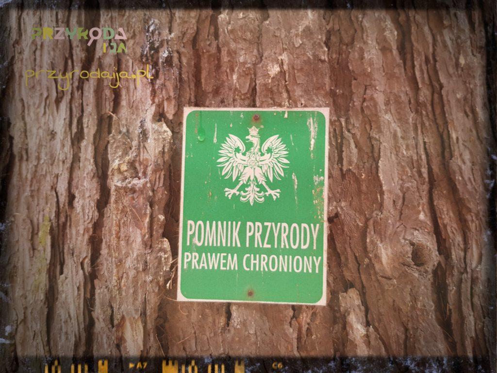 Przyroda i JA Wrocław (7)