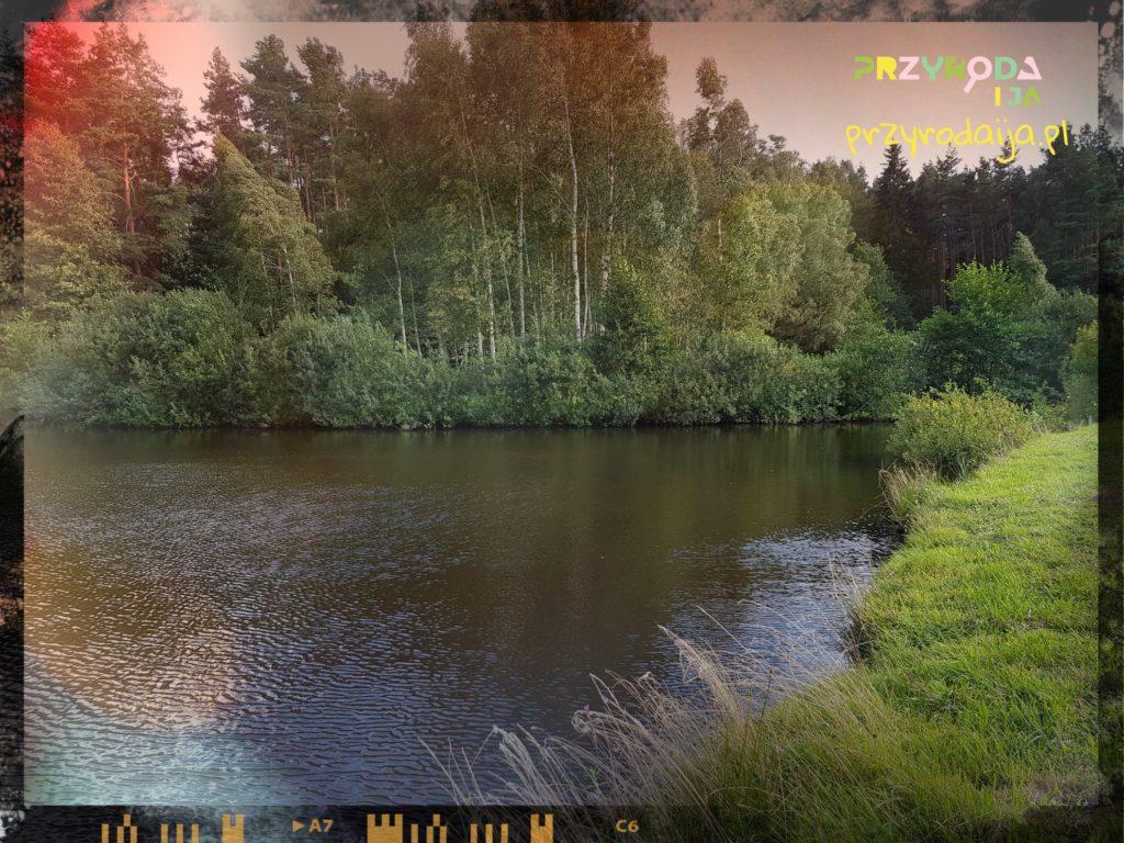 Przyroda i JA Wrocław (8)
