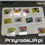 Przyroda i JA Wrocław - zajęcia dla dzieci (54)