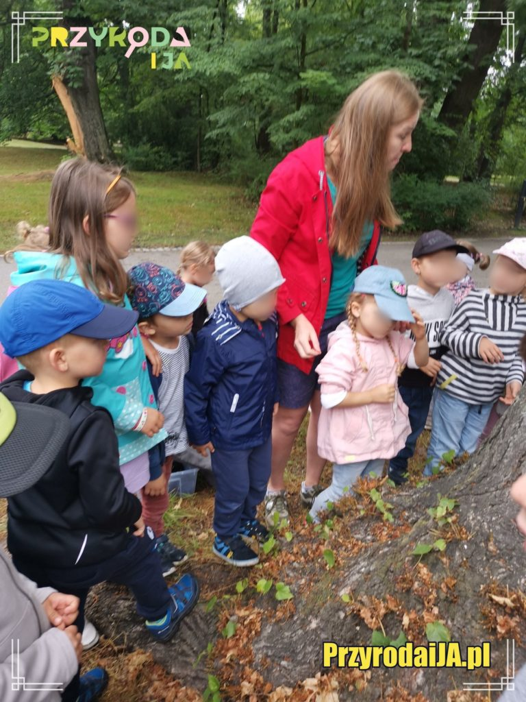 Przyroda i JA edukacja dla dzieci zajęcia terenowe 26