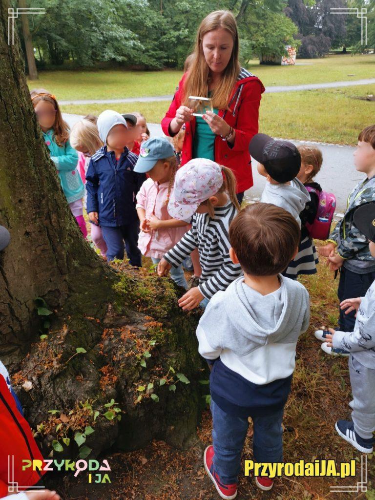 Przyroda i JA edukacja dla dzieci zajęcia terenowe 27