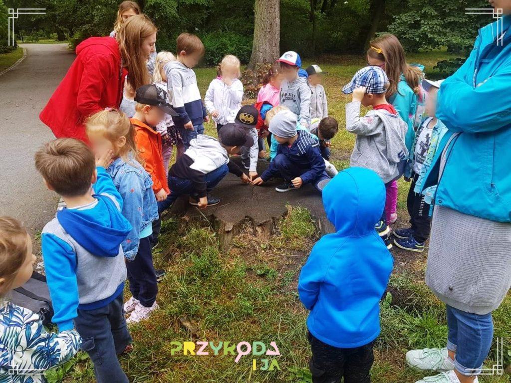 Przyroda i JA edukacja dla dzieci zajęcia terenowe 38