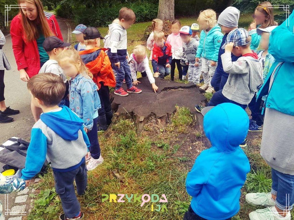 Przyroda i JA edukacja dla dzieci zajęcia terenowe 39