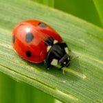 Przyroda i JA - Czy każda biedronka ma kropki? poznajemy świat owadów