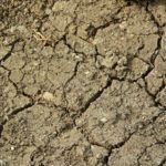 Przyroda i JA - Badanie gleby - mały świat pod naszymi stopami