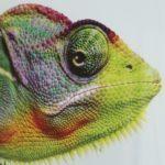 Przyroda i JA - Zwierzęta świata na kontynentach - poznajemy najciekawsze zwierzęta świata