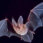 Przyroda i JA - Nietoperz - nocny łowca. Poznajemy świat latających ssaków