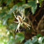 Przyroda i JA - Pająk mój przyjaciel czy wróg? - poznajemy świat pająków