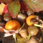 Przyroda i JA - Jak rośliny się poruszają? - wędrówki nasion