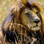 Przyroda i JA - Niesamowite mechanizmy obronne u zwierząt