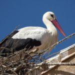 Przyroda i JA - Zwierzęta w mieście - poznajemy dzikie zwierzęta mieszkające w naszej okolicy