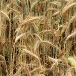 Przyroda i JA - Jak się robi produkty spożywcze? Gospodarstwo rolne