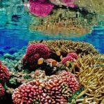 Przyroda i JA - Kto mieszka pod wodą? Podwodne życie